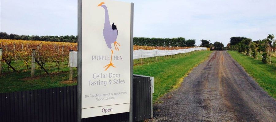 "Alt=""Purple Hen Winery sign with a vineyard in the background"""