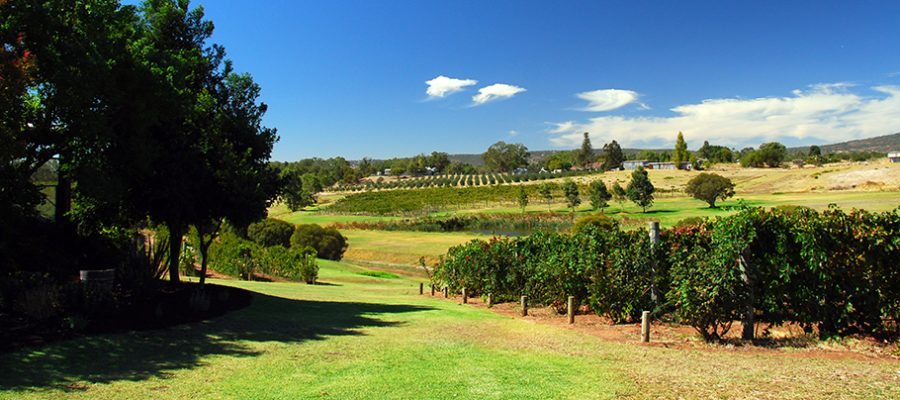 Swan Valley - Perth's Valley of Taste, Orchard
