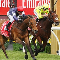 "alt=""Jockeys racing at the Melbourne Cup Carnival"""