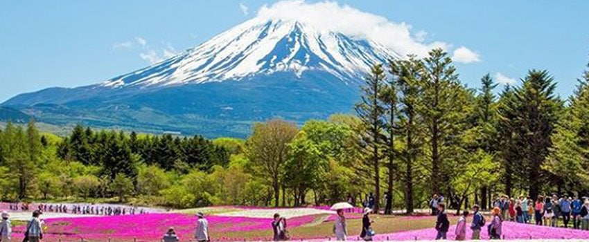 Shibazakura festival - The 6 Most Instagrammable places in Japan